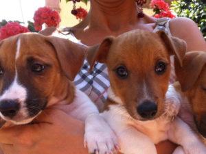 vendita cuccioli